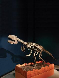 A visiting Szechuanosaurus