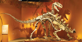 Monolophosaurus_attacking_Tuojiangosaurus_Web