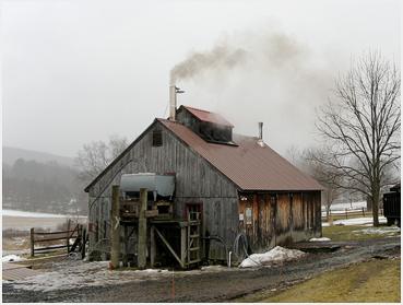 sullivan farm maple sugar