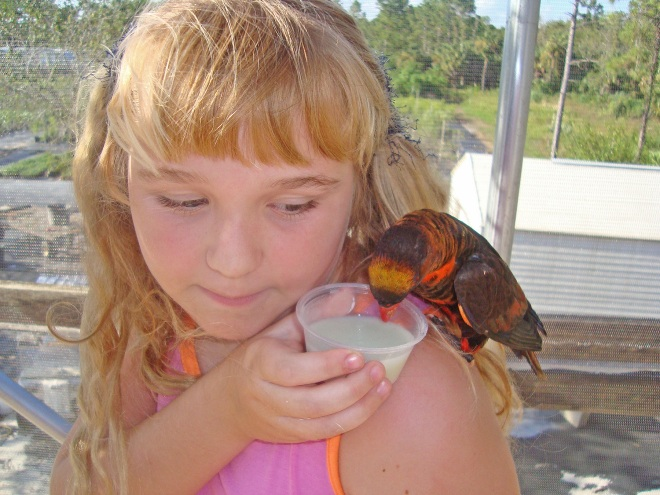 Aquar.lorikeet_feeding