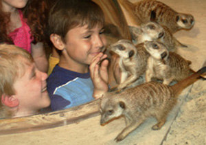 meercats and kids copy