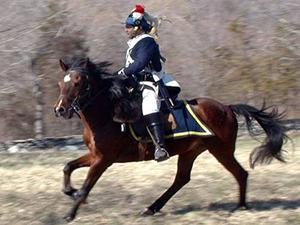 Sheldons_Horse