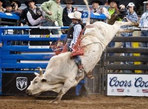 bull_riding_web