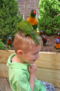Aquar.Lorikeets.on_head