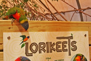 Aquar.Lorikeets.on_sign