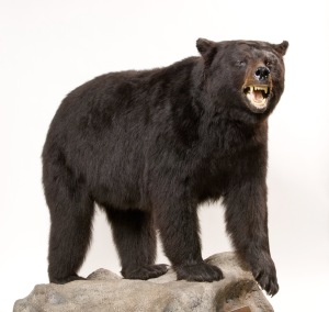 2010.06_Black Bear 3
