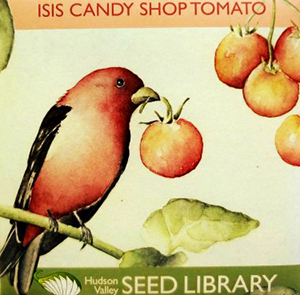 Isis Tomato Seed Pack