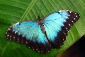 Aquar.Butterflies.1