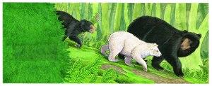 Brett Bears