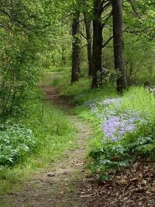 botany_trail_photo
