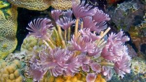 aquar-imax-secret-ocean-anemone