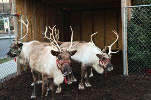 reindeer-slide