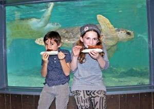 aquar-chocexpo17-turtles