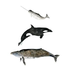 martinez-whales