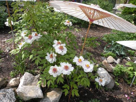 The Garden And Nursery Is Open Through June 18th, Tuesday Sunday, From  10am 5pm. They Are Closed On Mondays. The Exception Will Be Memorial Day  Monday, ...